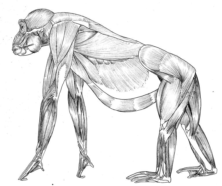curso-dibujo-animal-anatomia-comparada-comic-academiac104 - Cursos ...