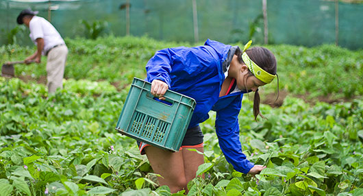 Organic Farm Volunteering in Costa Rica