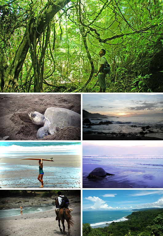 Turtle Protection Program volunteering in Montezuma, Costa Rica