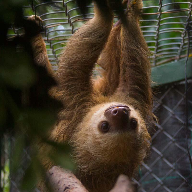Volunteering in Animal Rescue Centers in Costa Rica