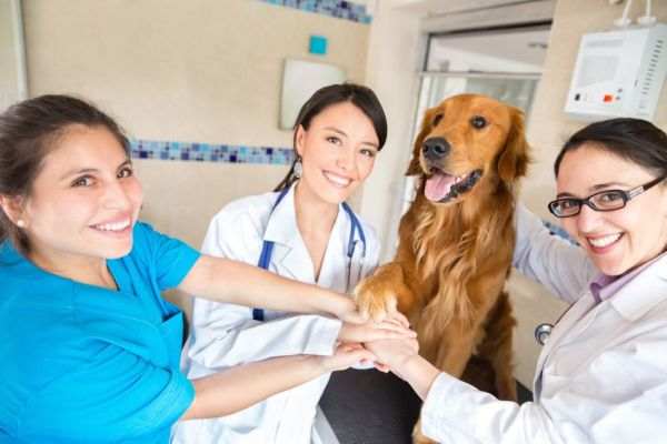 best-veterinary-schools-world