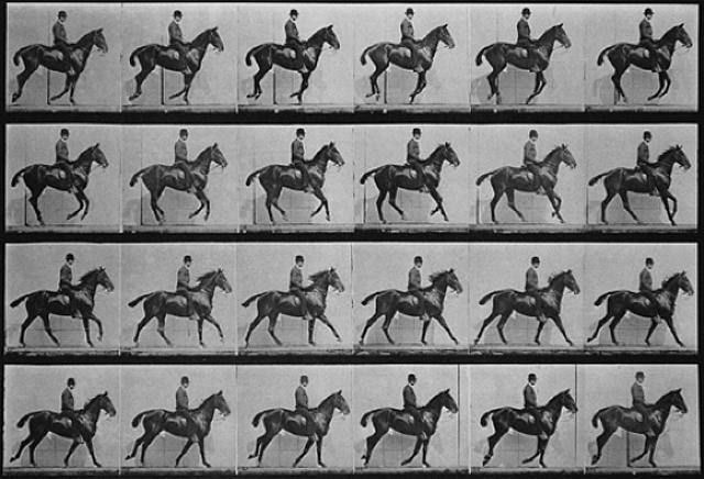 muybridge-canter