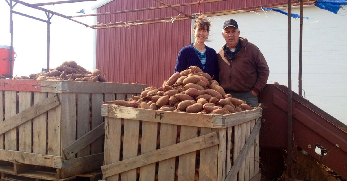 Organic Sweet Potatoes Oklahoma