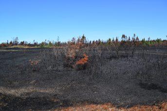 Le feu a laissé une végétation morte et réduite en cendres. Sur place, une légère odeur de brûlé se fait encore sentir. - Acadie Nouvelle: Vincent Pichard