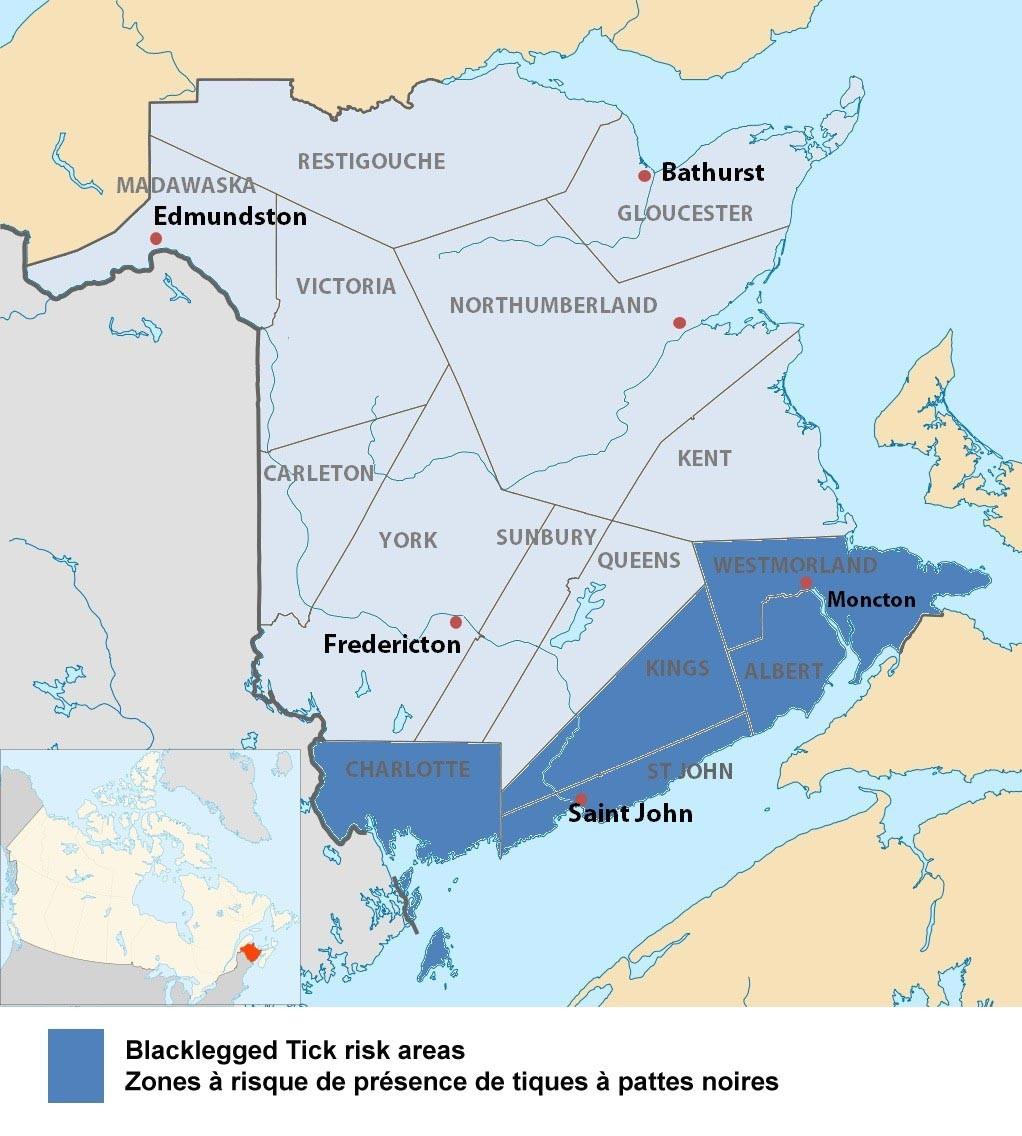 La zone de risque de la maladie de Lyme au Nouveau-Brunswick. - - Gracieuseté
