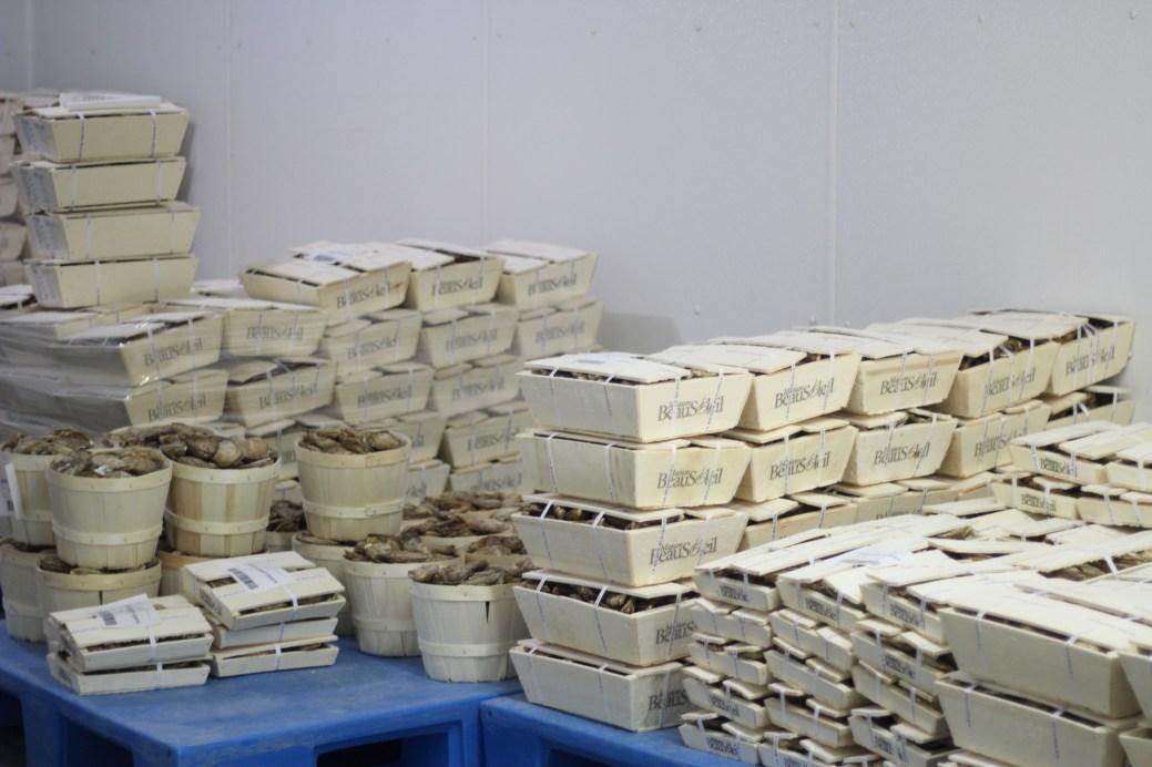 Des huîtres de la Maison Beausoleil, à Néguac. - Archives