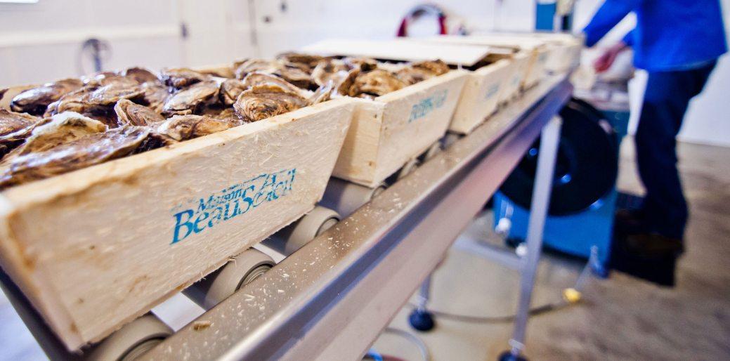 L'entreprise de Néguac exporte chaque année 800 tonnes d'huîtres à travers l'Asie du Sud-Est et l'Amérique du Nord. Bientôt, sa production doublera. - Acadie Nouvelle: Simon Delattre