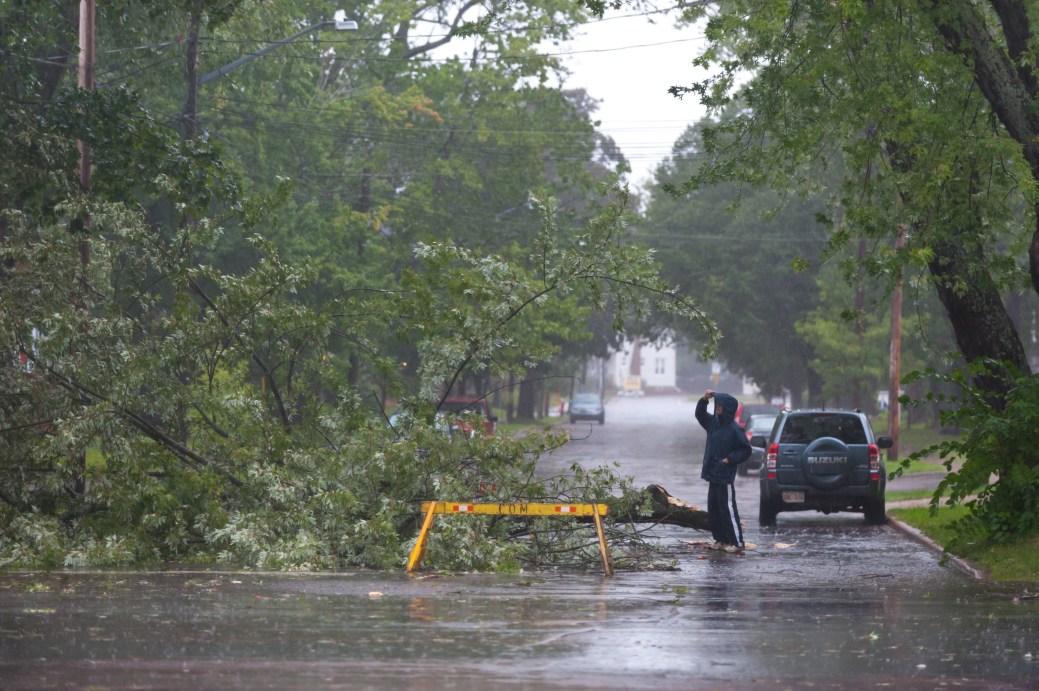 Un homme regarde un arbre tombé sur la rue Cameron, à Moncton. - La Presse canadienne: Marc Grandmaison