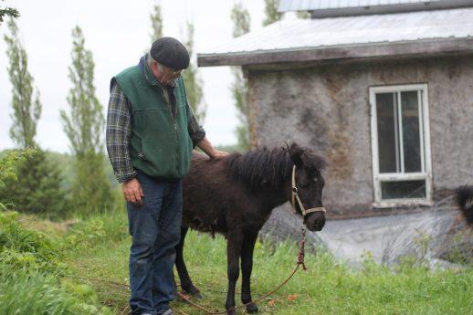 Charles Thériault et Betty St-Pierre prennent soin d'une foule d'animaux. - Acadie Nouvelle: Simon Delattre