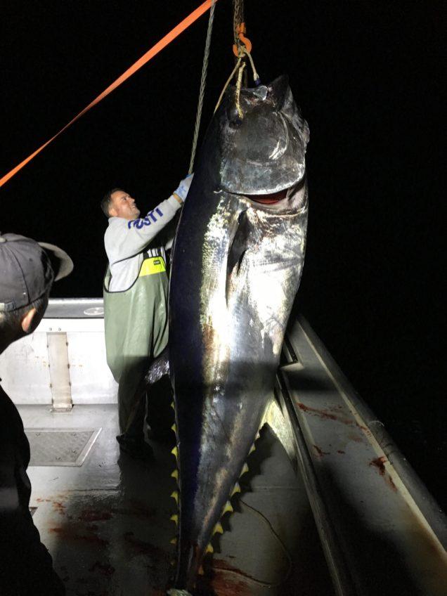 John Stewart remonte un thon au large de l'île Miscou. - Gracieuseté