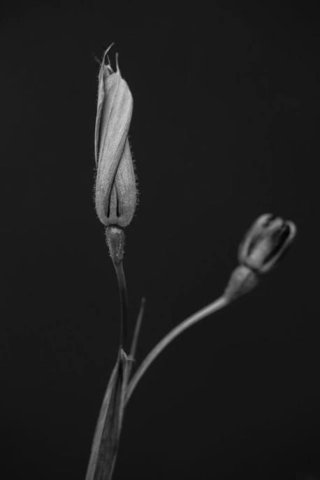 Flor dormida - Ramon Perez Heredia
