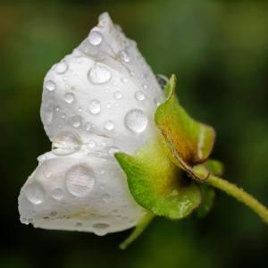 Flor primaveral - Xavier Estany Salas