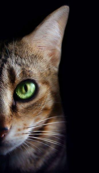 Gato - Cristell Justícia Carrasco