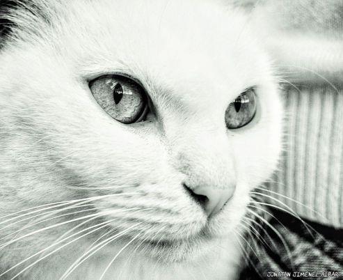 Gato - Jonatan Jimenez Aibar