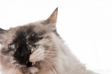 Gato - Santi Pedro