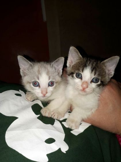 gatitos - Nieves Carrasco