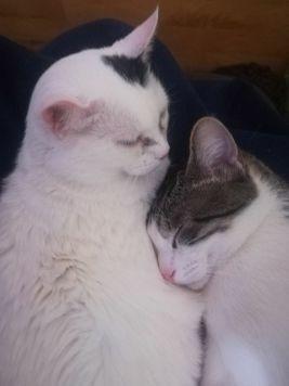gatos - Nieves Carrasco