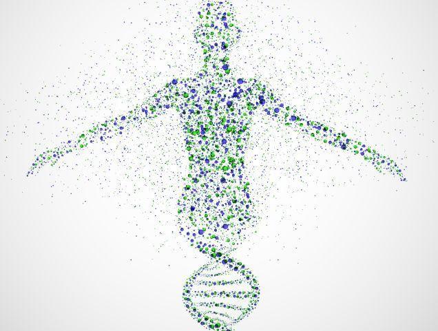 Proteine e agli Aminoacidi durante una dieta?