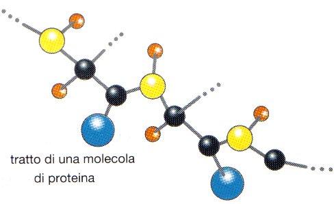 Le Proteine e la Dieta Chetogenica VLCKD