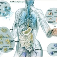 Microbiota Intestinale - La salute passa dall'intestino