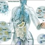 Microbiota Intestinale – La salute passa dall'intestino