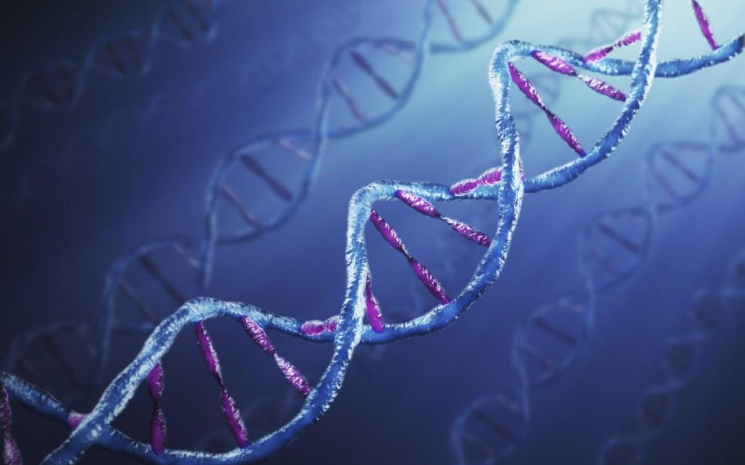 È importante la genetica?
