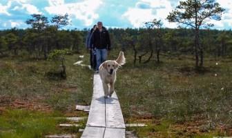 loode-eesti koer matkamine rmk loodusega koos