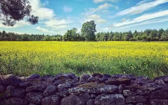 eesti looduse