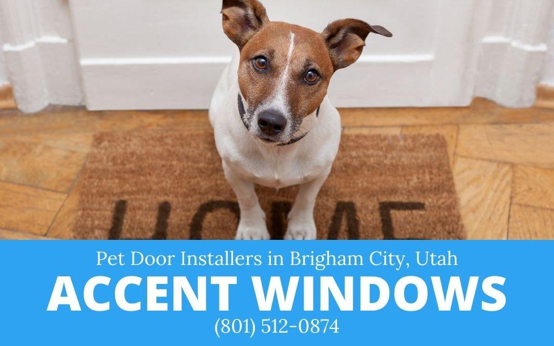 Pet Door Installation in Brigham City