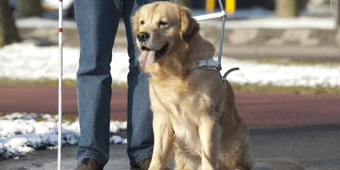 mascotas para personas con discapacidad