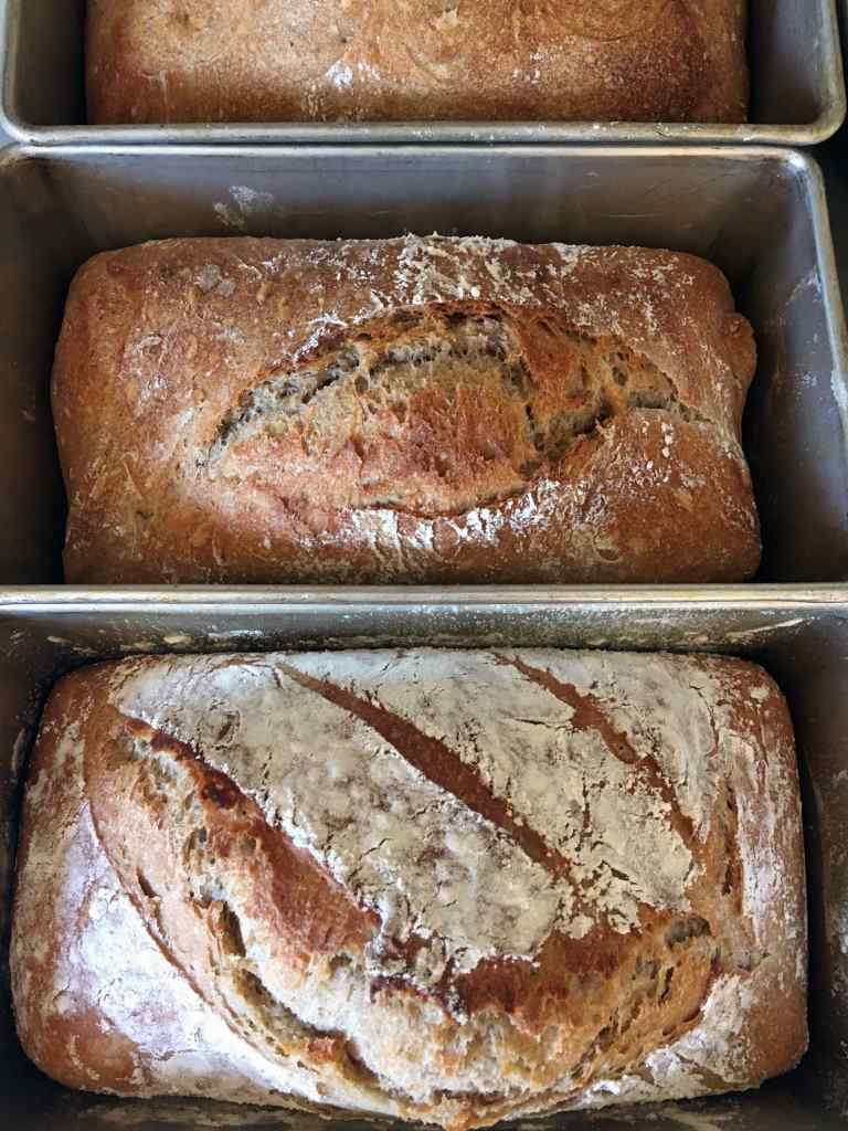 Two loaves of no knead spelt sourdough bread cooling in loaf tins