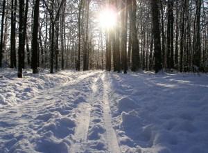 Cross country ski tracks in the snow