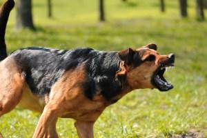 What are Arizona Laws Regarding Dog Bites?