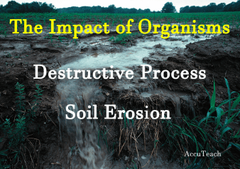Impact of Organisms on Soil Erosion