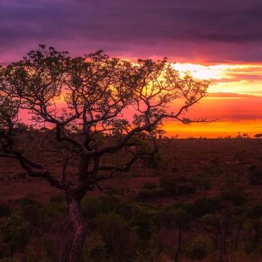 Pacchetto-safari-organizzati-tanzania