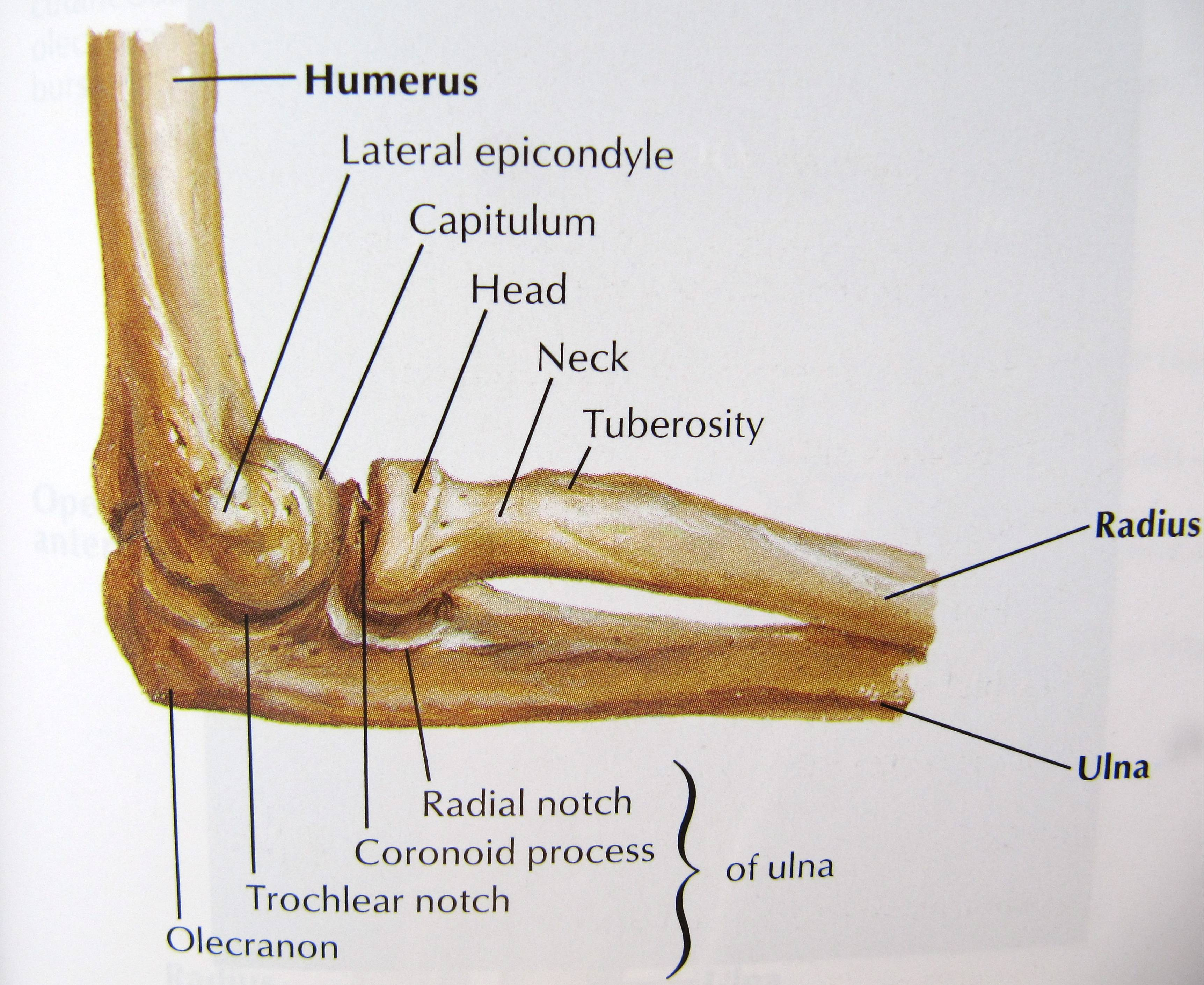 Radial Head Fractures