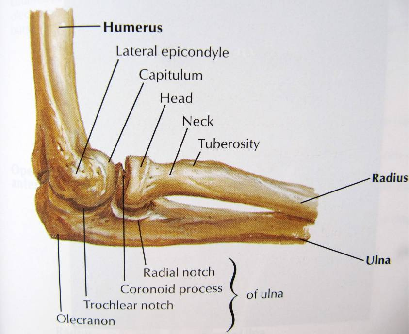 RADIAL HEAD FRACTURES - ACE Physical Therapy and Sports ...