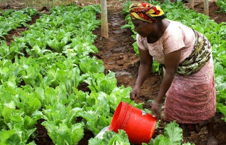 CFSI Au Bénin - construire l'offre de légumes agroécologiques