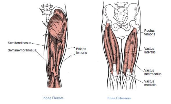 Left Posterior Knee Anatomy
