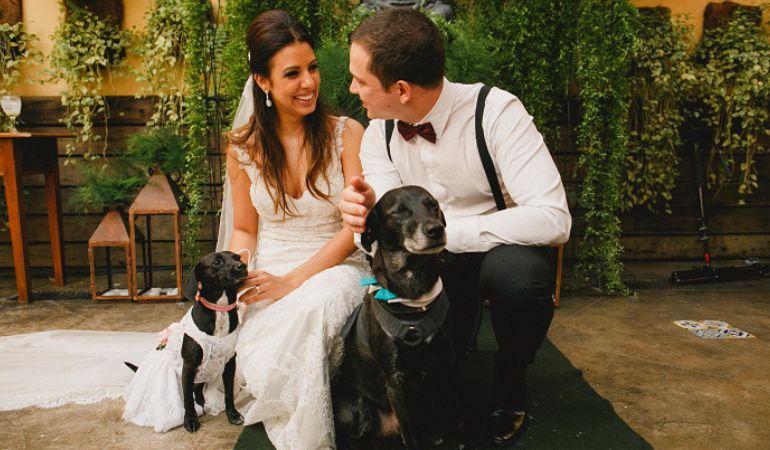 Pets no casamento