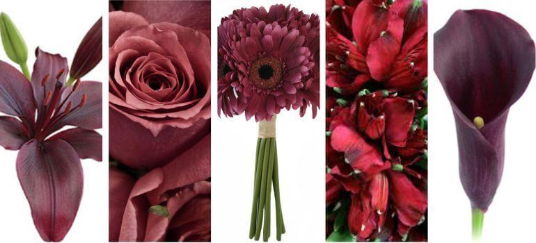 Flores Marsala