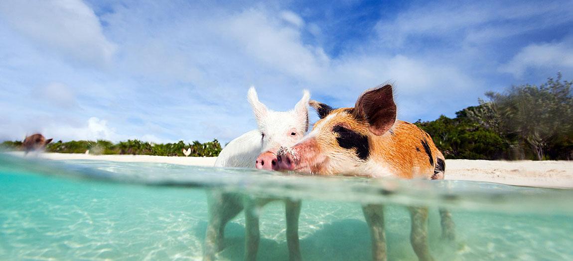 Lua de mel em Bahamas:
