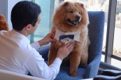 Gravata do pet azul - Foto: Nilson Versatti