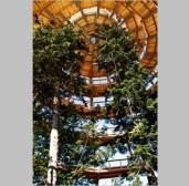 treetopwalk_5