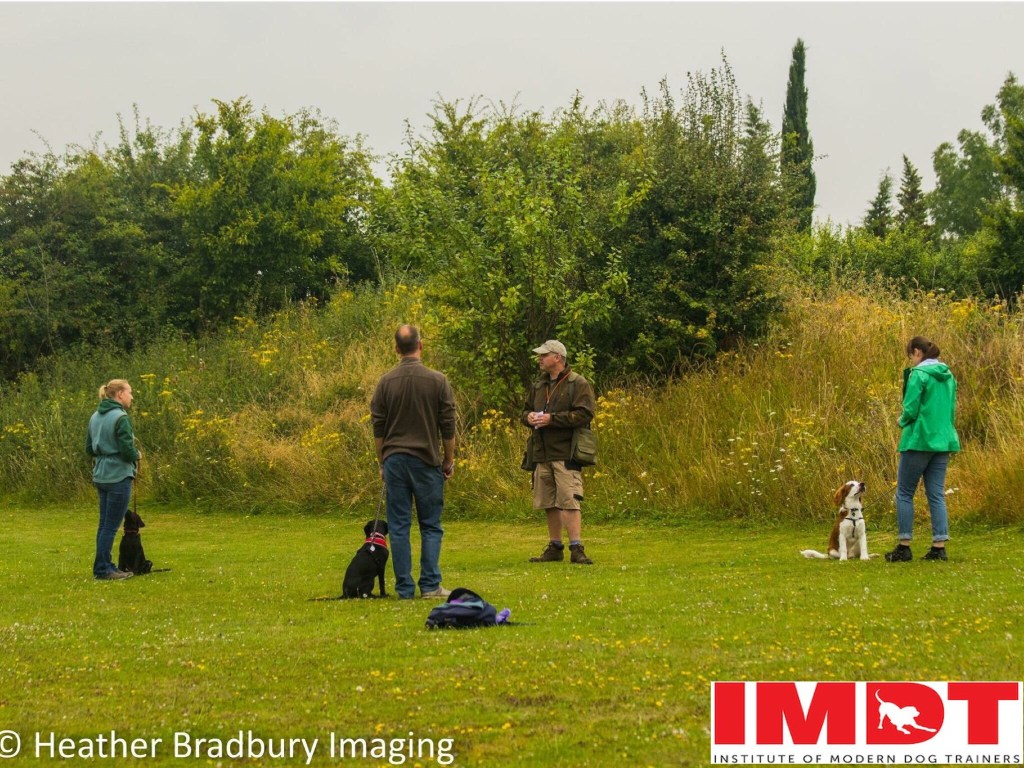 gundog training in herts cambs beds