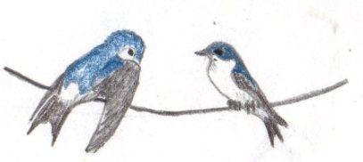 Bird Sketch South Wales