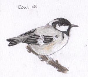 Bird Ecology