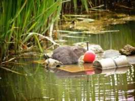 Water Vole Feeding Station