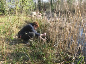 newt bottle trapping survey