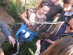 newt netting survey